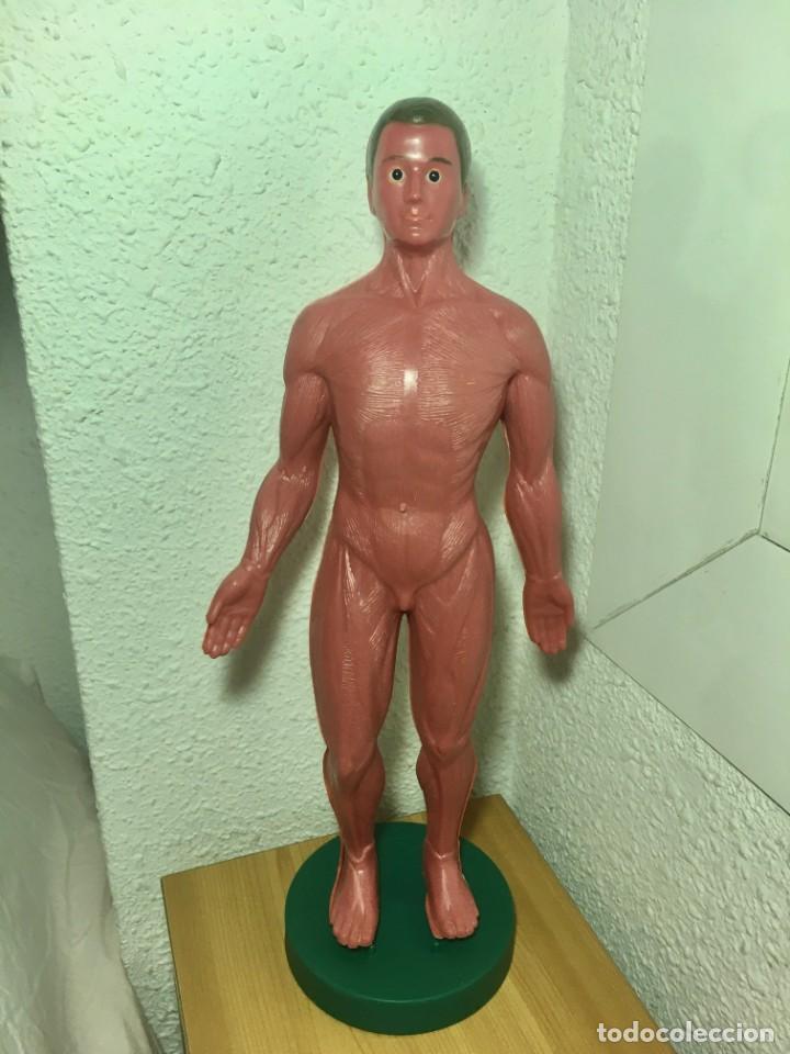Libros: ERASE UNA VEZ EL CUERPO HUMANO - Atlas anatómico y 2 Cuerpos hombre y mujer - Todo Completo - Foto 11 - 186121976