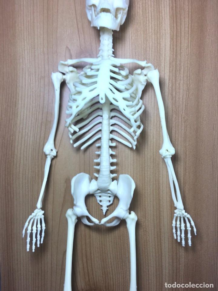 Libros: ERASE UNA VEZ EL CUERPO HUMANO - Atlas anatómico y 2 Cuerpos hombre y mujer - Todo Completo - Foto 5 - 186121976