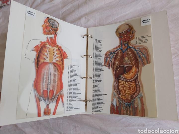 Libros: ERASE UNA VEZ EL CUERPO HUMANO - Atlas anatómico y 2 Cuerpos hombre y mujer - Todo Completo - Foto 14 - 186121976