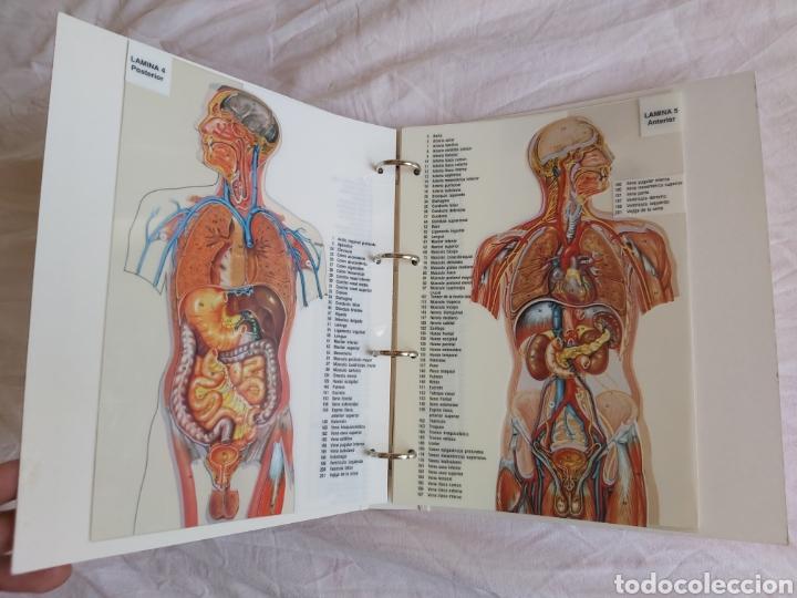Libros: ERASE UNA VEZ EL CUERPO HUMANO - Atlas anatómico y 2 Cuerpos hombre y mujer - Todo Completo - Foto 15 - 186121976