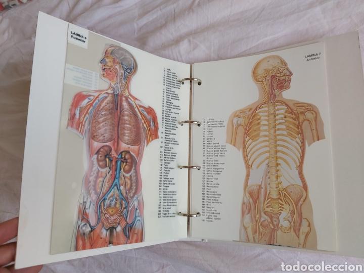 Libros: ERASE UNA VEZ EL CUERPO HUMANO - Atlas anatómico y 2 Cuerpos hombre y mujer - Todo Completo - Foto 16 - 186121976