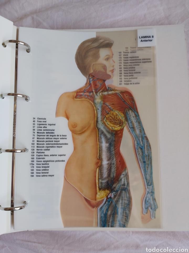 Libros: ERASE UNA VEZ EL CUERPO HUMANO - Atlas anatómico y 2 Cuerpos hombre y mujer - Todo Completo - Foto 17 - 186121976
