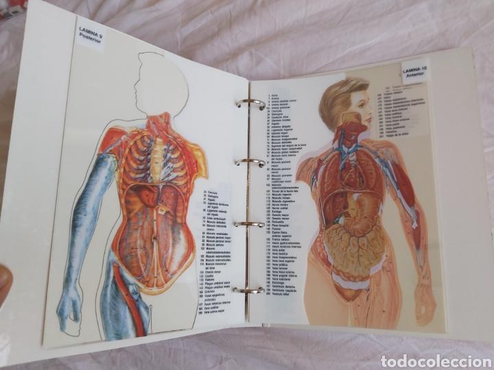 Libros: ERASE UNA VEZ EL CUERPO HUMANO - Atlas anatómico y 2 Cuerpos hombre y mujer - Todo Completo - Foto 18 - 186121976