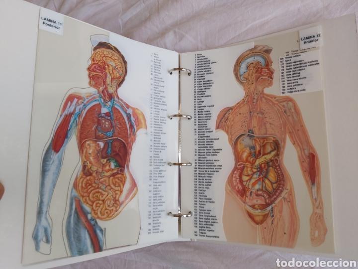 Libros: ERASE UNA VEZ EL CUERPO HUMANO - Atlas anatómico y 2 Cuerpos hombre y mujer - Todo Completo - Foto 19 - 186121976