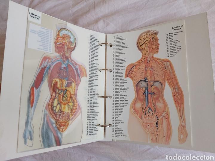 Libros: ERASE UNA VEZ EL CUERPO HUMANO - Atlas anatómico y 2 Cuerpos hombre y mujer - Todo Completo - Foto 20 - 186121976