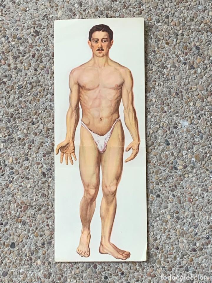 POSTER ANATOMIA HUMANA HOMBRE DESMONTABLE ESQUELETO MUSCULATURA ANOTACIONES PPIO S XX 43X48CMS (Libros Nuevos - Ciencias, Manuales y Oficios - Anatomía )