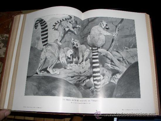 Libros antiguos: WELTALL UND MENSCHHEIT dedicado a la evolución del hombre. Enc. modernista - Foto 10 - 27325015