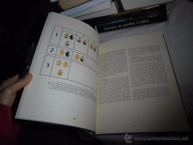 Libros antiguos: GIJON ANTES DE GIJON BREVE APROXIMACION A LOS PRIMEROS GRUPOS DE PREDADORES.J.ADOLFO RODRIGUEZ,M.NOV - Foto 6 - 52839898