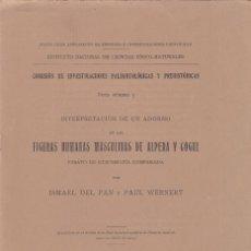 Libros antiguos: ISMAEL DEL PAN Y P. WERNERT: INTERPRETACIÓN ADORNO DE FIGURAS HUMANAS EN ALPERA Y COGUL. MADRID 1915. Lote 128215999