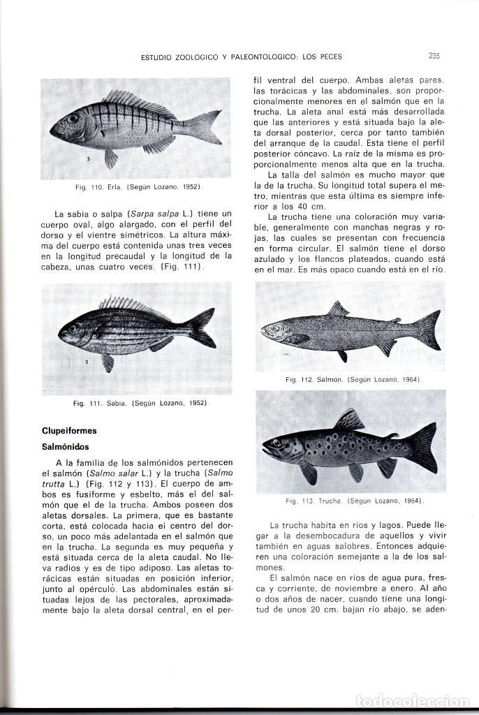 Libros antiguos: 10 TOMOS REVISTA MUNIBE CIENCIAS NATURALES DE PAIS VASCO Y NAVARRA AÑOS 1663 AL 1976 - Foto 8 - 248006560