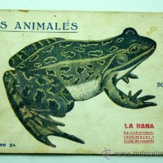 Libros antiguos: LA RANA SU NATURALEZA COSTUMBRES Y MODO DE CAZARLO LOS ANIMALES CUADERNO 24 PRENSA POPULAR 1919. Lote 25218822
