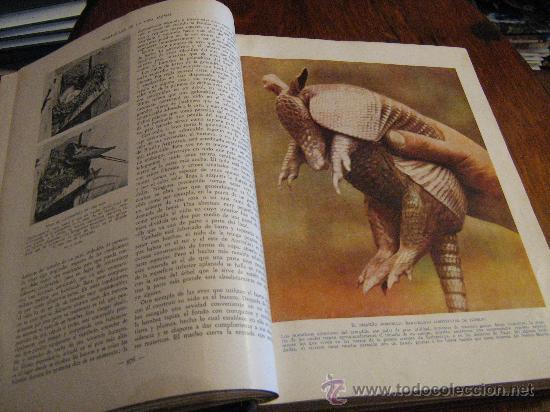 Libros antiguos: MARAVILLAS DE LA VIDA ANIMAL - TOMO III - JOAQUÍN GIL EDITOR - BARCELONA, 1930 - Foto 4 - 28589730