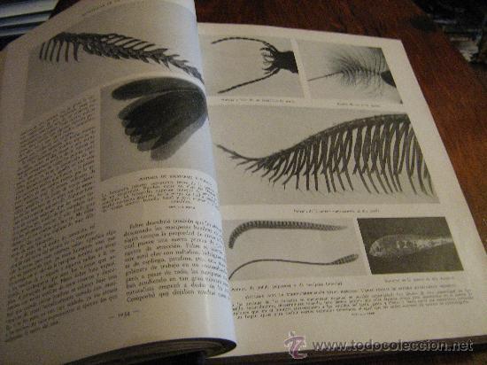 Libros antiguos: MARAVILLAS DE LA VIDA ANIMAL - TOMO III - JOAQUÍN GIL EDITOR - BARCELONA, 1930 - Foto 5 - 28589730