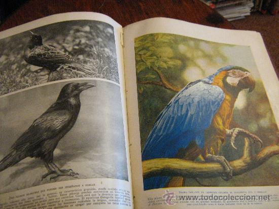 Libros antiguos: MARAVILLAS DE LA VIDA ANIMAL - TOMO III - JOAQUÍN GIL EDITOR - BARCELONA, 1930 - Foto 6 - 28589730