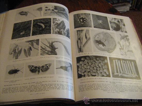 Libros antiguos: MARAVILLAS DE LA VIDA ANIMAL - TOMO III - JOAQUÍN GIL EDITOR - BARCELONA, 1930 - Foto 7 - 28589730