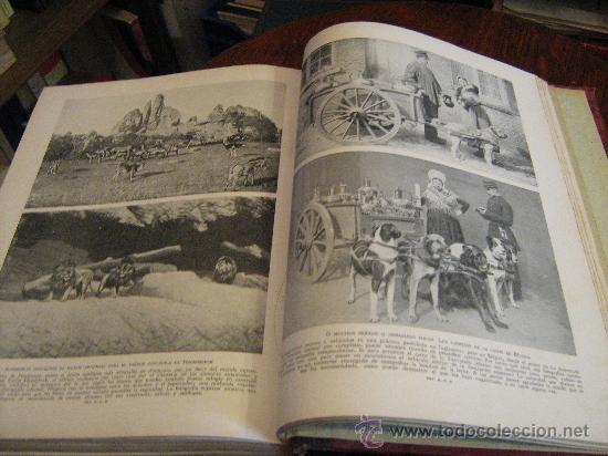 Libros antiguos: MARAVILLAS DE LA VIDA ANIMAL - TOMO III - JOAQUÍN GIL EDITOR - BARCELONA, 1930 - Foto 10 - 28589730