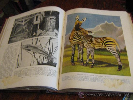 Libros antiguos: MARAVILLAS DE LA VIDA ANIMAL - TOMO III - JOAQUÍN GIL EDITOR - BARCELONA, 1930 - Foto 11 - 28589730