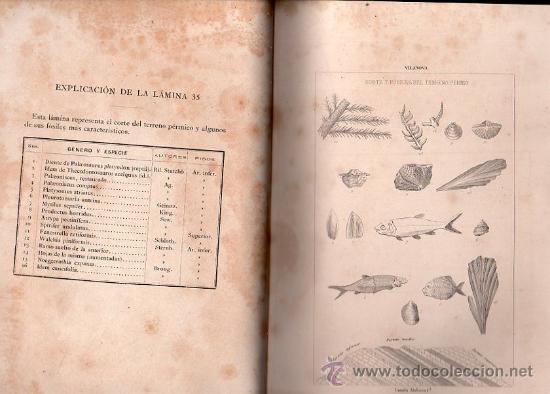 Libros antiguos: GEOLOGÍA Y PROTOHISTORIA IBÉRICAS, JUAN VILANOVA Y PIERA, JUAN DE DIOS DE LA RADA Y DELGADO - Foto 6 - 29759207