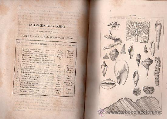 Libros antiguos: GEOLOGÍA Y PROTOHISTORIA IBÉRICAS, JUAN VILANOVA Y PIERA, JUAN DE DIOS DE LA RADA Y DELGADO - Foto 5 - 29759207