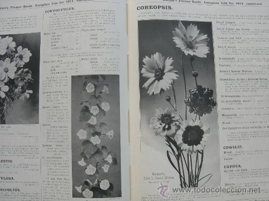 Libros antiguos: SUTTON´S AMATEUR´S GUIDE IN HORTICUTURE FOR 1911 (INGLÉS) - HORTICULTURA - Foto 3 - 29998771