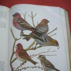 Libros antiguos: BIRDS OF AMERICA - 1936 . Lote 30778492