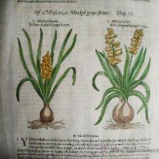 Libros antiguos: 1597-JACINTO.PLANTAS Y FLORES.GERRARD. 3 GRABADOS.PRIMERA EDICIÓN.GRABADO ORIGINAL.BIOLOGÍA. Lote 31296611