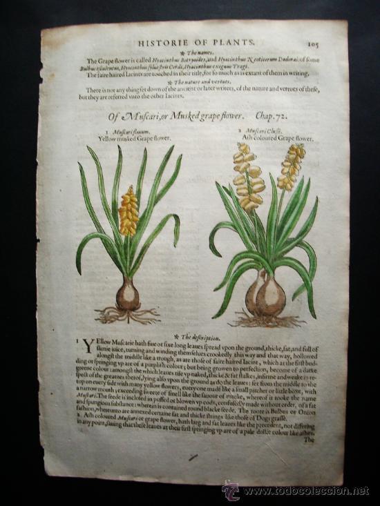 Libros antiguos: 1597-JACINTO.PLANTAS Y FLORES.GERRARD. 3 GRABADOS.PRIMERA EDICIÓN.GRABADO ORIGINAL.BIOLOGÍA - Foto 2 - 31296611