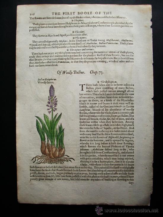 Libros antiguos: 1597-JACINTO.PLANTAS Y FLORES.GERRARD. 3 GRABADOS.PRIMERA EDICIÓN.GRABADO ORIGINAL.BIOLOGÍA - Foto 3 - 31296611