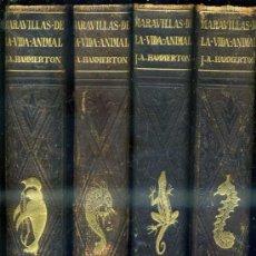 Libros antiguos: HAMMERTON : MARAVILLAS DE LA VIDA ANIMAL - 4 TOMOS (JOAQUÍN GIL, 1930). Lote 35617848