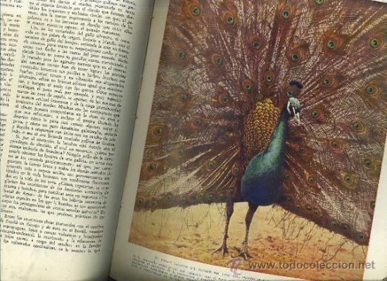 Libros antiguos: HAMMERTON : MARAVILLAS DE LA VIDA ANIMAL - 4 TOMOS (JOAQUÍN GIL, 1930) - Foto 2 - 35617848