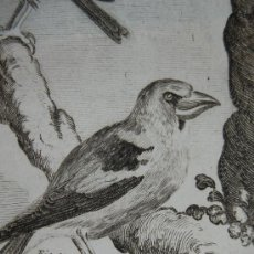 Libros antiguos: HISTOIRE NATURELLE DES OISEAUX (6º TOMO), VARIOS AUTORES, AÑO 1775.. Lote 35792593