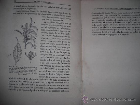 Libros antiguos: LA VIDA DE LAS FLORES, por J. DANTIN CERECEDA - CALPE - España - 1922 - RARA EDICION! - Foto 4 - 36493782