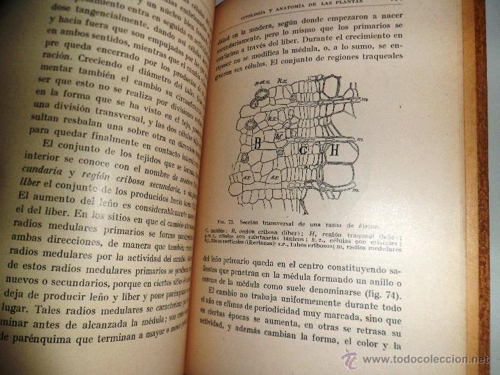 Libros antiguos: CITOLOGÍA Y ANATOMÍA DE LAS PLANTAS. HUGO MIEHE. PRIMERA EDICIÓN (1928) VER INDICE - Foto 8 - 39386139
