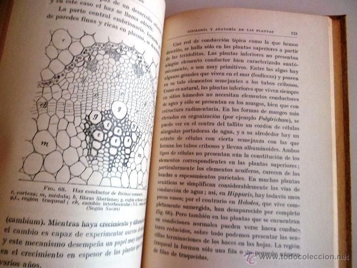 Libros antiguos: CITOLOGÍA Y ANATOMÍA DE LAS PLANTAS. HUGO MIEHE. PRIMERA EDICIÓN (1928) VER INDICE - Foto 7 - 39386139