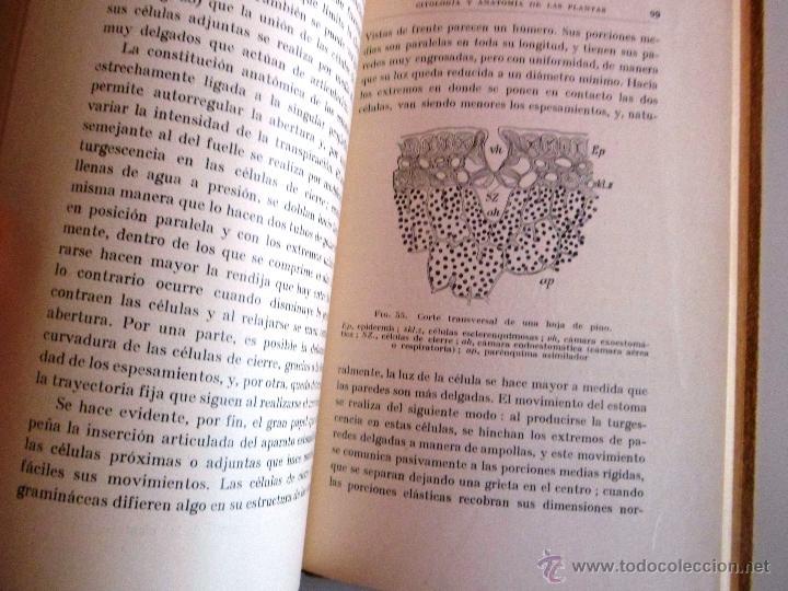 Libros antiguos: CITOLOGÍA Y ANATOMÍA DE LAS PLANTAS. HUGO MIEHE. PRIMERA EDICIÓN (1928) VER INDICE - Foto 6 - 39386139