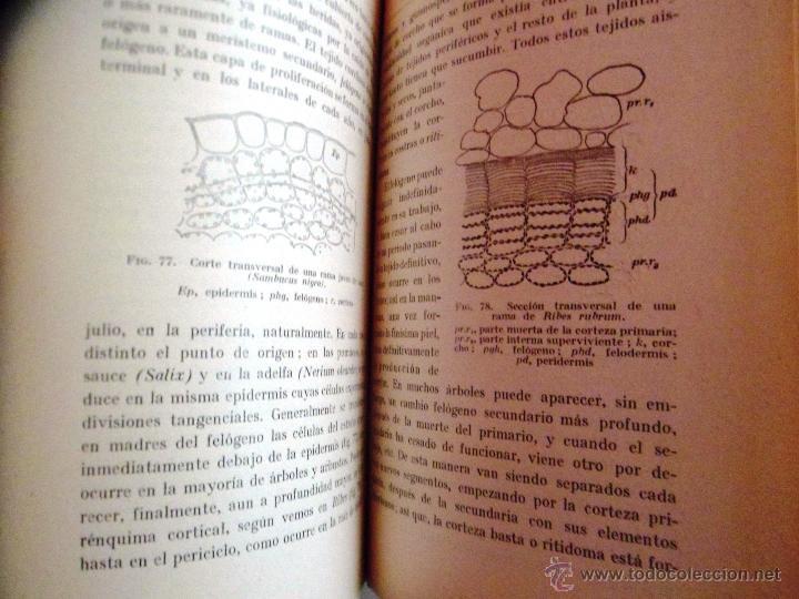 Libros antiguos: CITOLOGÍA Y ANATOMÍA DE LAS PLANTAS. HUGO MIEHE. PRIMERA EDICIÓN (1928) VER INDICE - Foto 4 - 39386139