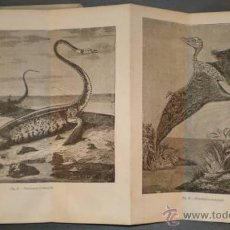 Libros antiguos: ALMERA, JAIME PBRO: COSMOGONIA Y GEOLOGIA. 1877. Lote 40030669