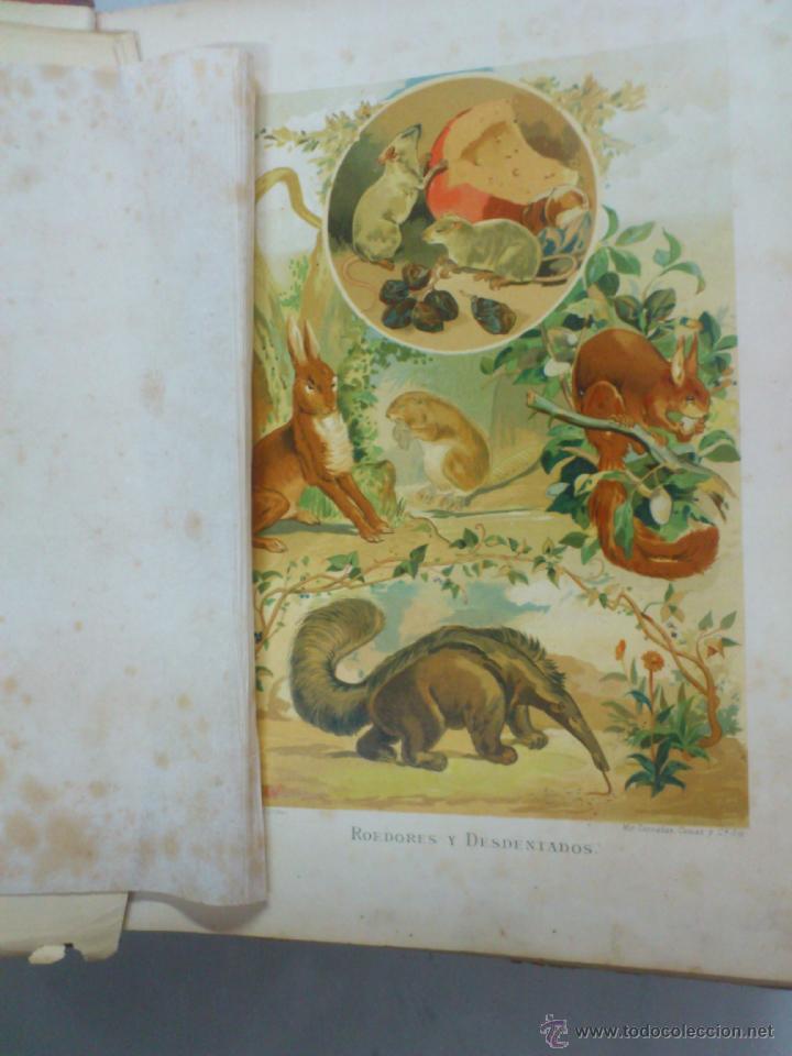 Libros antiguos: LA VIDA DE LOS ANIMALES. A.E.BREHM. TOMO II. MAMIFEROS. SEGUNDA EDICION ESPAÑOLA. FINALES S.XIX. - Foto 3 - 40421322