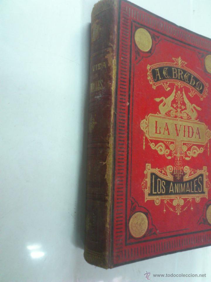 Libros antiguos: LA VIDA DE LOS ANIMALES. A.E.BREHM. TOMO II. MAMIFEROS. SEGUNDA EDICION ESPAÑOLA. FINALES S.XIX. - Foto 4 - 40421322