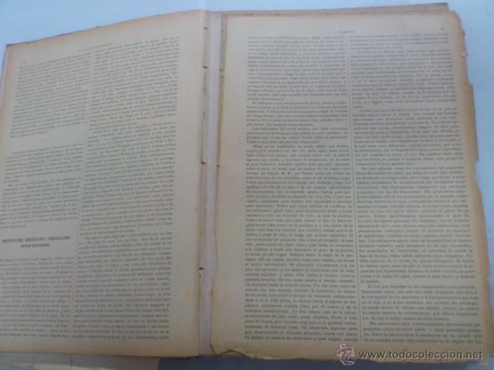 Libros antiguos: LA VIDA DE LOS ANIMALES. A.E.BREHM. TOMO II. MAMIFEROS. SEGUNDA EDICION ESPAÑOLA. FINALES S.XIX. - Foto 6 - 40421322