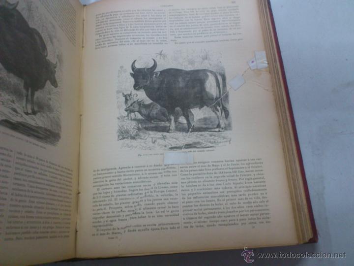 Libros antiguos: LA VIDA DE LOS ANIMALES. A.E.BREHM. TOMO II. MAMIFEROS. SEGUNDA EDICION ESPAÑOLA. FINALES S.XIX. - Foto 9 - 40421322