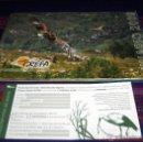 Libros antiguos: GREFA ANUARIO 2009 GRUPO DE REHABILITACIÓN DE LA FAUNA AUTÓCTONA Y SU HÁBITAT CON REGALO.. Lote 41158251