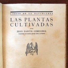 Libros antiguos: LAS PLANTAS CULTIVADAS. JUAN DANTÍN CERECEDA. 1929. Lote 43965105