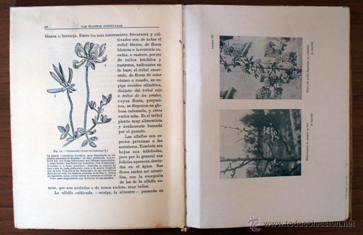 Libros antiguos: LAS PLANTAS CULTIVADAS. JUAN DANTÍN CERECEDA. 1929 - Foto 3 - 43965105