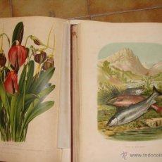 Libros antiguos: HISTORIA NATURAL VILANOVA Y PIERA. 8 TOMOS. 1872. 3260 ILUSTRACIONES LITOGRÁFICAS Y 105 CRÓMOLITOGRA. Lote 44073956