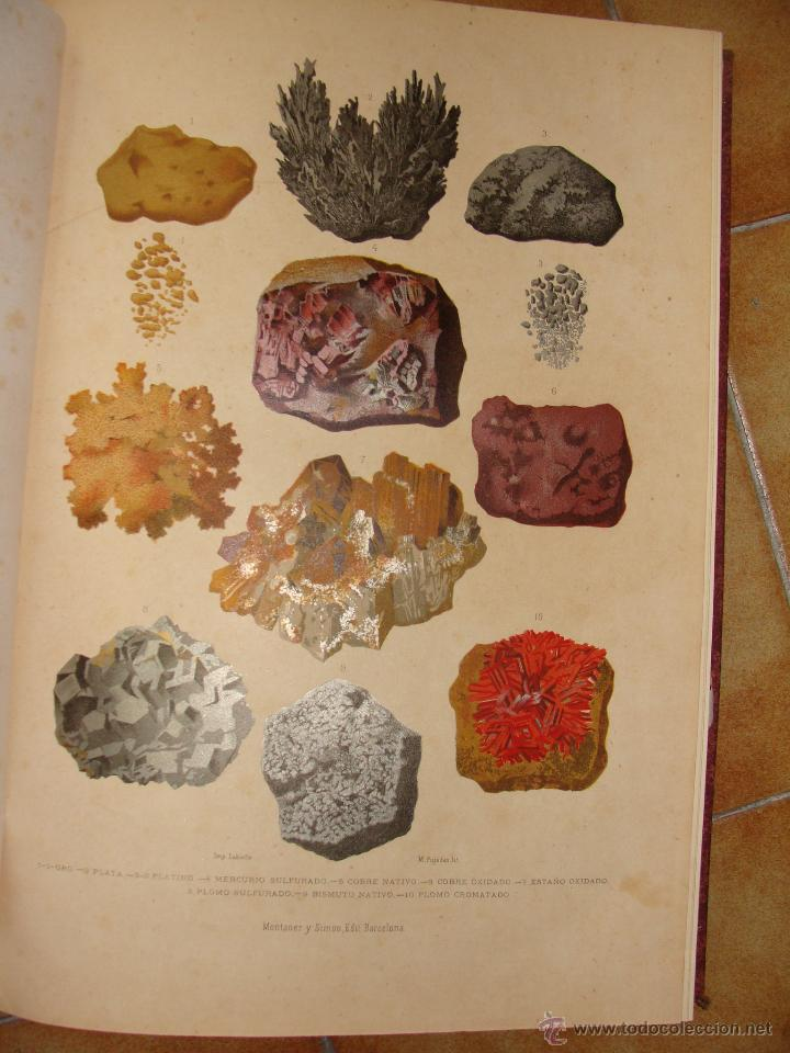 Libros antiguos: HISTORIA NATURAL VILANOVA Y PIERA. 8 TOMOS. 1872. 3260 ILUSTRACIONES LITOGRÁFICAS Y 105 CRÓMOLITOGRA - Foto 4 - 44073956