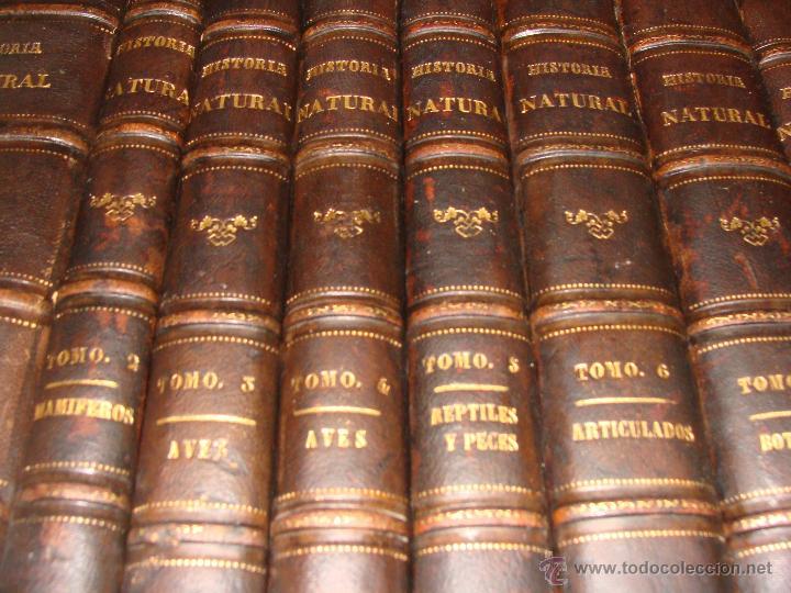 Libros antiguos: HISTORIA NATURAL VILANOVA Y PIERA. 8 TOMOS. 1872. 3260 ILUSTRACIONES LITOGRÁFICAS Y 105 CRÓMOLITOGRA - Foto 7 - 44073956
