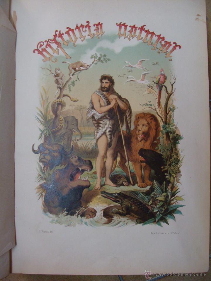 Libros antiguos: HISTORIA NATURAL VILANOVA Y PIERA. 8 TOMOS. 1872. 3260 ILUSTRACIONES LITOGRÁFICAS Y 105 CRÓMOLITOGRA - Foto 9 - 44073956