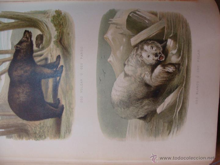 Libros antiguos: HISTORIA NATURAL VILANOVA Y PIERA. 8 TOMOS. 1872. 3260 ILUSTRACIONES LITOGRÁFICAS Y 105 CRÓMOLITOGRA - Foto 10 - 44073956
