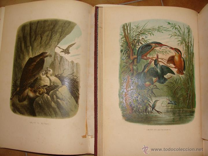 Libros antiguos: HISTORIA NATURAL VILANOVA Y PIERA. 8 TOMOS. 1872. 3260 ILUSTRACIONES LITOGRÁFICAS Y 105 CRÓMOLITOGRA - Foto 13 - 44073956